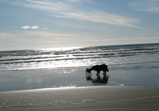 Happy dogs on the beach!