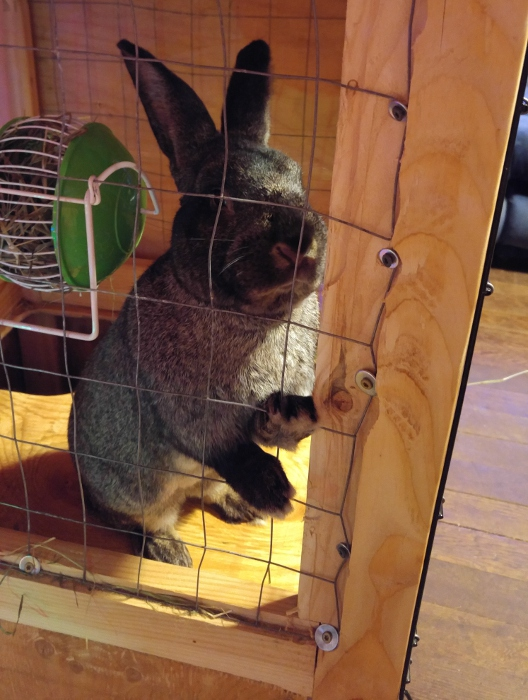 Bunsen and his hay feeder