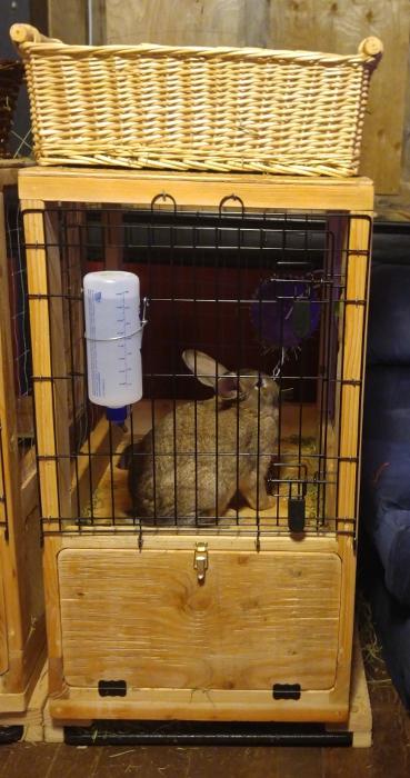 Honey Buns uses her Kaytee Rollin' The Hay Rabbit Feeder