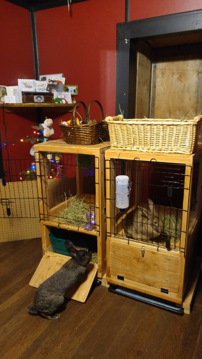 Custom rabbit hutches